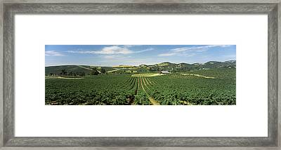 High Angle View Of A Vineyard, Carneros Framed Print