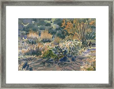 High Desert Flora Framed Print