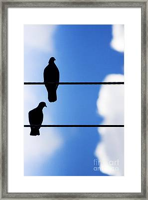 High On A Wire Framed Print by Jorgo Photography - Wall Art Gallery
