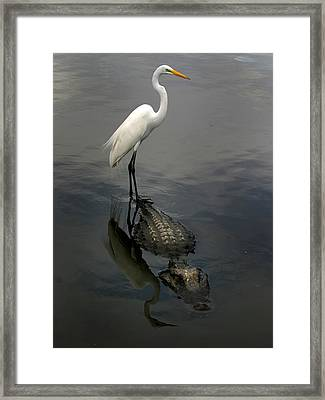 Hitch Hiker Framed Print