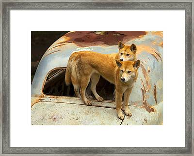 Hitching A Ride Framed Print by Mike  Dawson