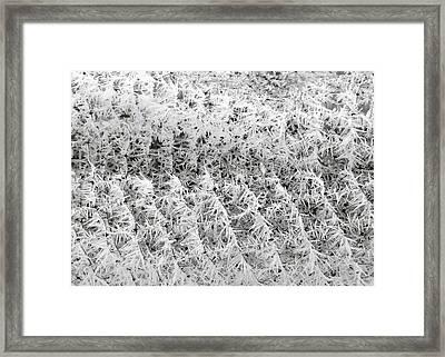 Hoarfrost 14 Framed Print by Will Borden