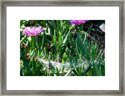 Hocuspocus Framed Print by Marit Runyon