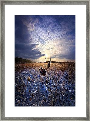 Holding On Framed Print by Phil Koch