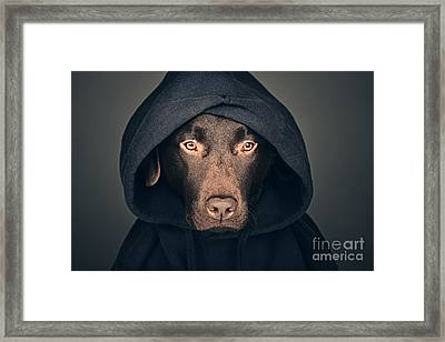 Hooded Dog Framed Print by Justin Paget