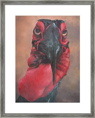 Hornbill Framed Print by Keith Michenzie