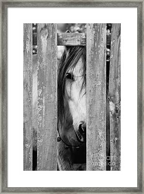 Horse Board 2 Framed Print by Lynda Dawson-Youngclaus
