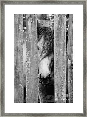 Horse Board Framed Print by Lynda Dawson-Youngclaus