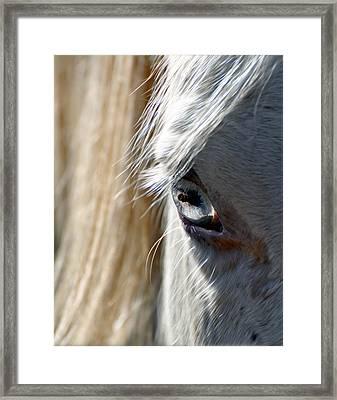 Horse Eye Framed Print by Savannah Gibbs
