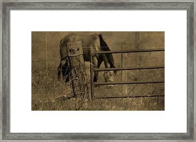 Horse On The Farm Framed Print by Dan Sproul