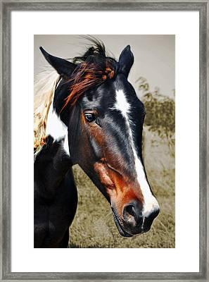 Framed Print featuring the photograph Horse by Savannah Gibbs