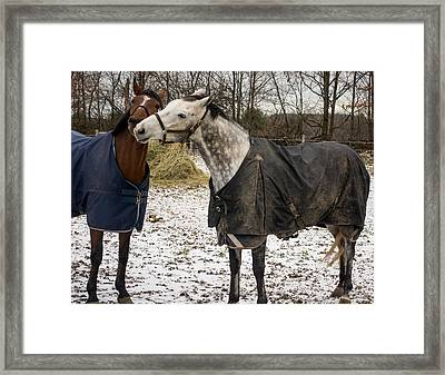 Horse Whispers Framed Print