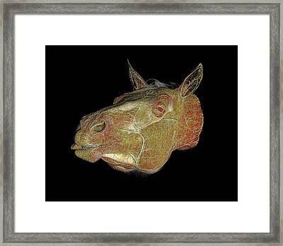 Horse's Head Framed Print by Anders Persson, Cmiv