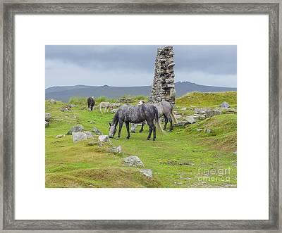 Horses On The Moors Of Dartmoor Framed Print by Patricia Hofmeester