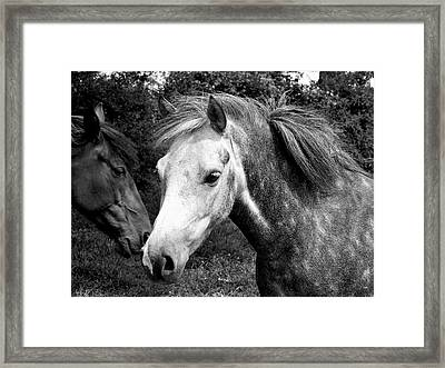 Horses Framed Print by Thomas Leon