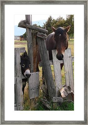 Horsing Around Framed Print by Athena Mckinzie