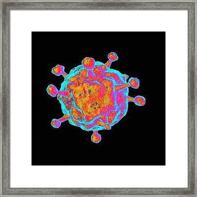 Human B-lymphotropic Virus Framed Print by Mehau Kulyk