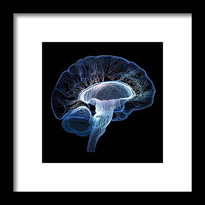 Brain Framed Prints