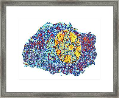 Human Cell Framed Print by Alfred Pasieka