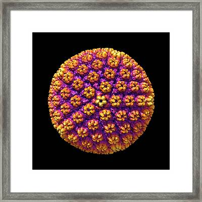 Human Cytomegalovirus Framed Print by Louise Hughes