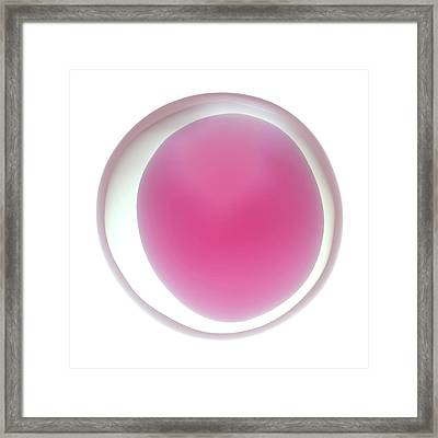 Human Egg Cell Framed Print by Maurizio De Angelis
