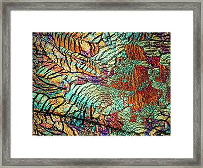 Human Fatty Acids Framed Print by Steve Lowry