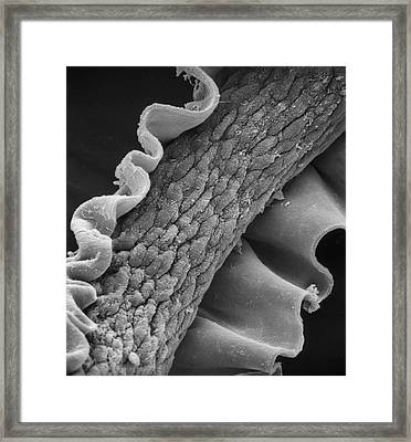 Human Hair Framed Print