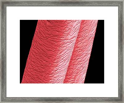 Human Hairs Framed Print by Thierry Berrod, Mona Lisa Production