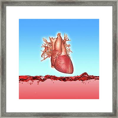 Human Heart Framed Print