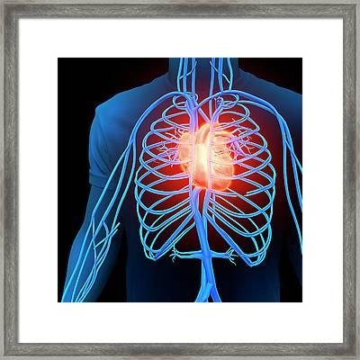 Human Heart And Circulatory System Framed Print by Andrzej Wojcicki
