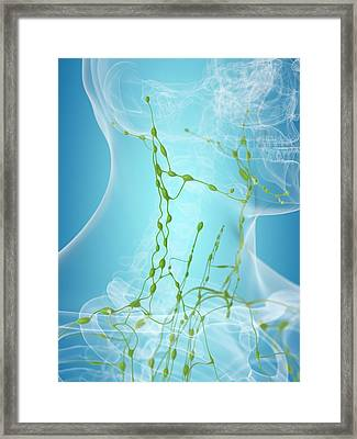 Human Lymphatic System Framed Print by Sciepro