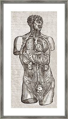 Human Male Torso, 16th Century Framed Print by Middle Temple Library