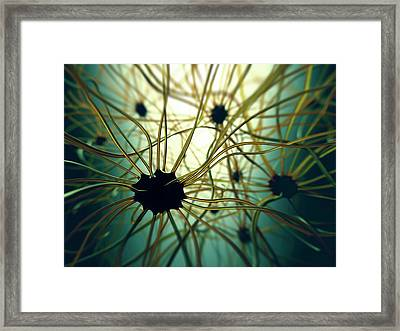 Human Nerve Cells Framed Print