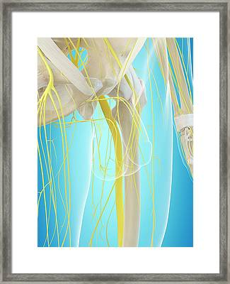 Human Nervous System Framed Print by Sciepro