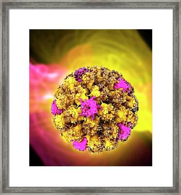 Human Papilloma Virus Particle Framed Print