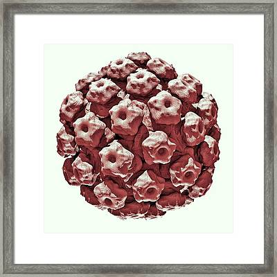 Human Papilloma Virus Particle Framed Print by Russell Kightley