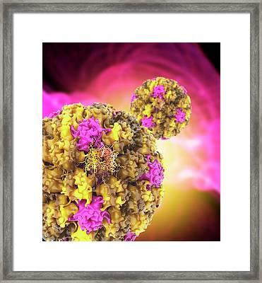 Human Papilloma Virus Particles Framed Print