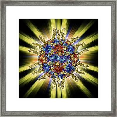 Human Poliovirus Framed Print