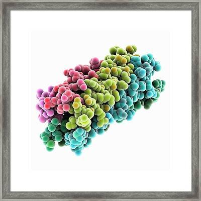 Human Rotavirus Enterotoxin Framed Print