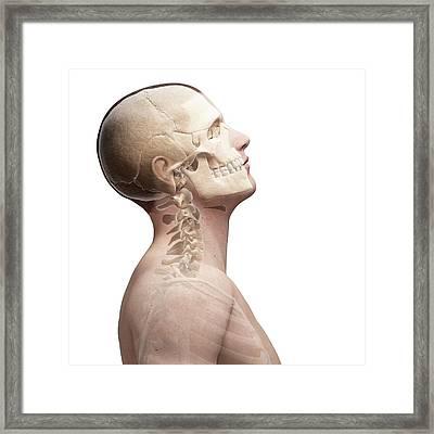 Human Skull And Neck Bones Framed Print