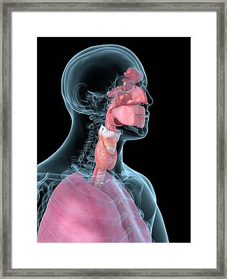 Human Throat Framed Print by Sciepro