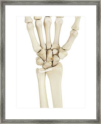 Human Wrist Bones Framed Print