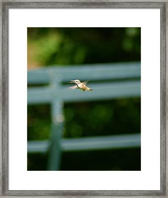 Framed Print featuring the photograph Hummer In Flight by Ben Upham III
