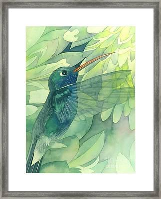 Hummingbird And Chrysanthemum Framed Print