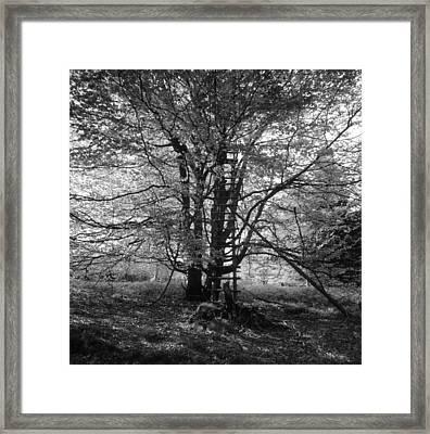 Hunter's Hide In A Beech Tree - Monochrome Framed Print by Ulrich Kunst And Bettina Scheidulin