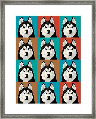 Husky Pop Art Framed Print by Susan Stone