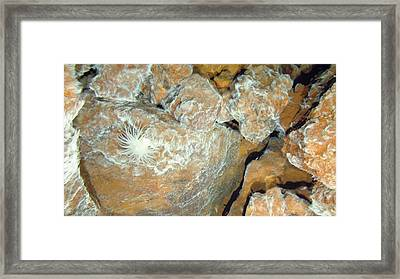 Hydrothermal Bacterial Mat Framed Print by B. Murton/southampton Oceanography Centre/ Science Photo Library