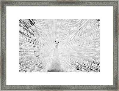 Hypnotic Power Framed Print
