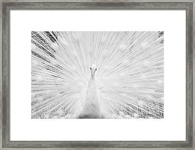 Hypnotic Power Framed Print by Simona Ghidini