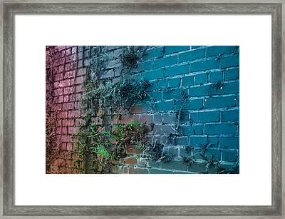 I Can Grow Anywhere  Framed Print by Robert Palmeri